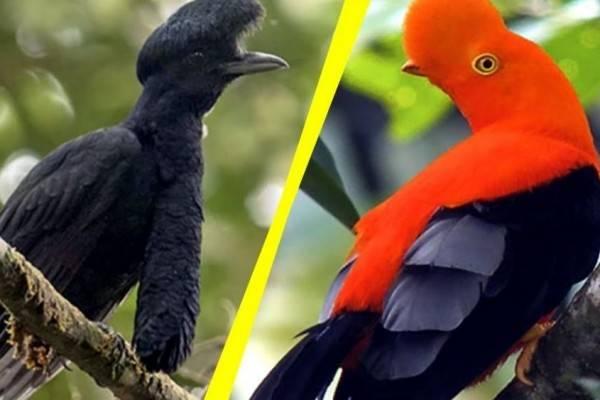 7 Penampakan Burung Paling Aneh