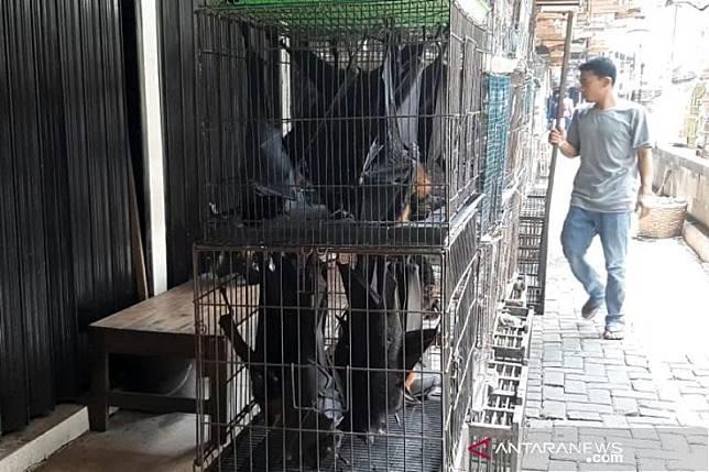 Pedagang kelelawar Solo tidak khawatir virus corona