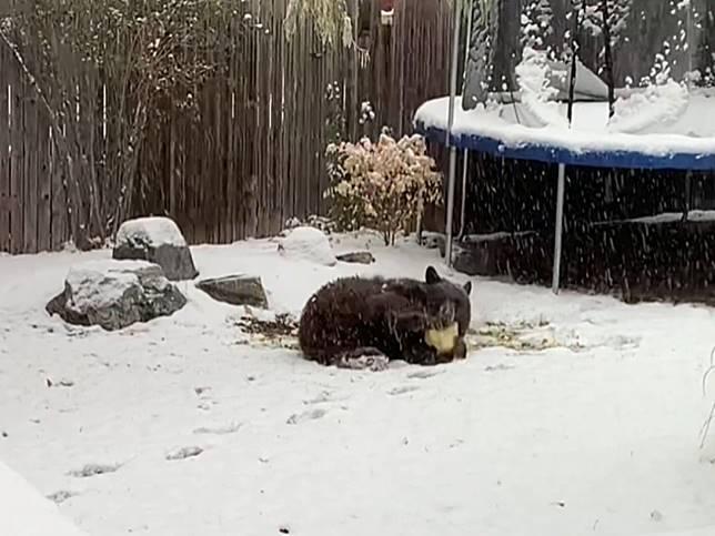 動起來!毛毛動物不怕寒冷 就是要在雪裡大玩特玩好嗨森