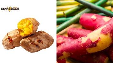 烤蕃薯、冰烤地瓜推薦!最佳營養聖品地瓜營養知多少?