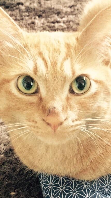猫サロン🐈にゃんこ写真館