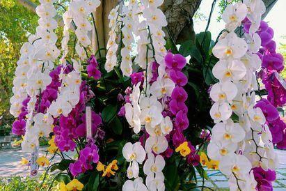 Ini Manfaat Bunga Anggrek Dan Cara Mudah Menanamnya Sehatq Line Today