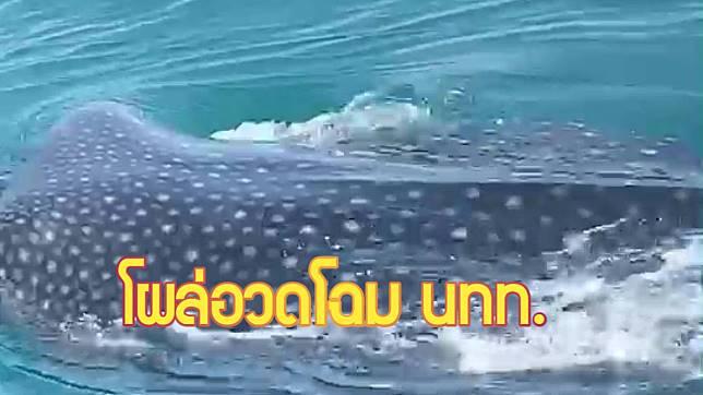 กระบี่-เจอถี่ๆ ฉลามวาฬทะเลกระบี่ ว่ายอวดโฉมนทท. บริเวณแหลมหางนาค (ชมคลิป)