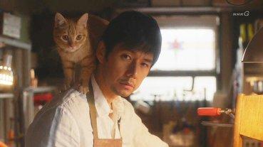 貓奴必看日劇七選!超萌貓咪武士與全貓語日劇你看過嗎?