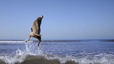 就算你不是愛狗人士 你也要會「目不轉睛」的看著這位攝影師的精彩寵物照