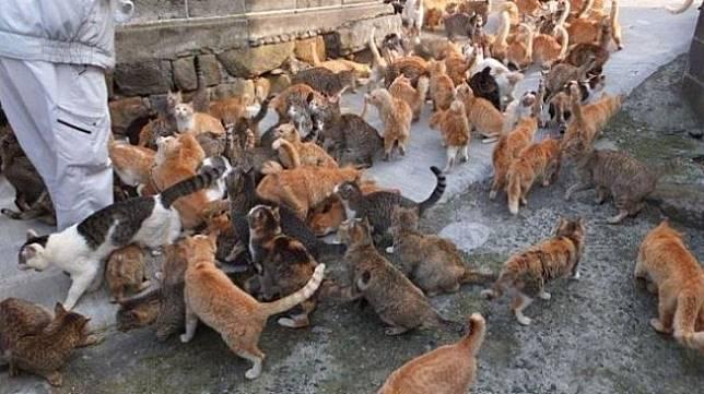Tak Lazim, 3 Desa Unik di Jepang Ini Dihuni Ribuan Kucing hingga Boneka