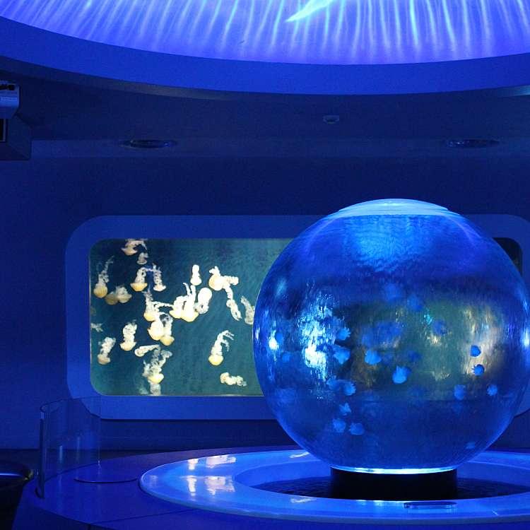 めいごはんさんが投稿した片瀬海岸水族館・アクアリウムのお店新江ノ島水族館/シンエノシマスイゾクカンの写真