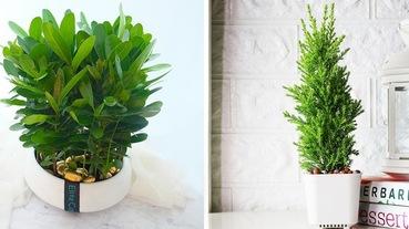 植樹節快到了!多肉植物盆栽正夯,5款療癒小盆栽推薦,迎接充滿綠意的清新日常