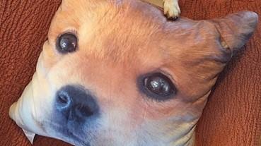 動物治癒時間:柴犬on柴犬