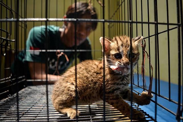 Hukuman yang Bisa Menjerat Penyiksa Kucing Pakai Ciu