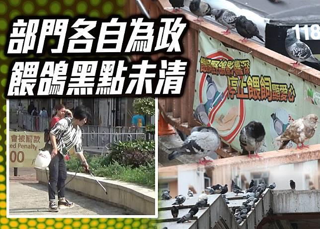 本港多區深受鴿患困擾,惟部門仍各自為政,令問題多年未改善。