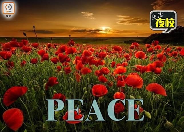 生活夜校:11月11日是紀念和平的日子!(互聯網)
