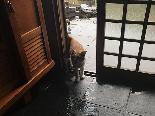 開門讓浪貓躲強颱豪雨 喵星人以滿滿肉球腳印答謝超療癒!