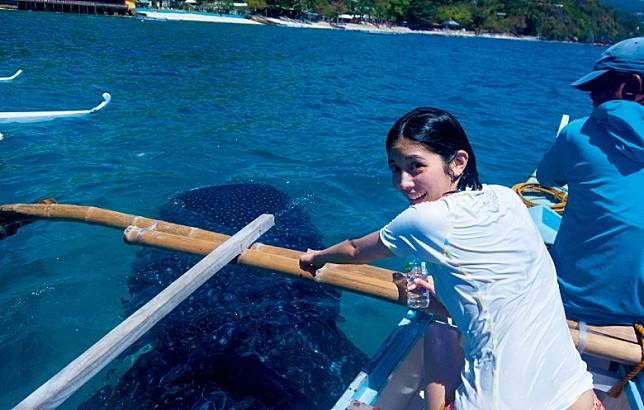 宿霧有不少鯨鯊出沒,松田琉花特別出海去找鯨鯊。(互聯網)
