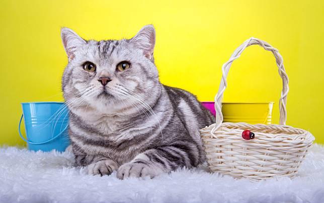 60 Nama Kucing Lucu Jantan Dan Betina Mudah Diingat Dan Penuh Makna Merdeka Com Line Today
