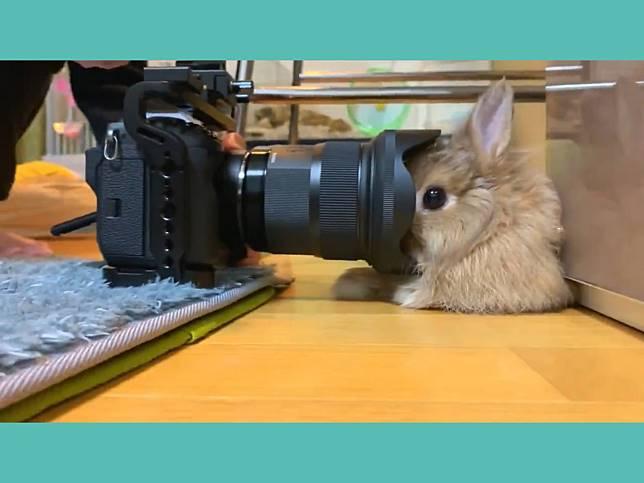 鏡頭步步進逼兔兔全程定格 接吻前10秒超萌畫面獨家直擊!