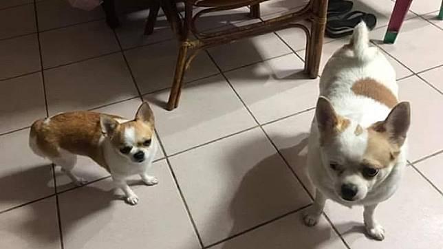 這對兄妹米克斯,左邊是妹右邊是哥,你看得出當中差異嗎?(圖/翻攝自爆廢公社)