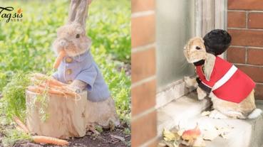 可愛到好像從哪個童話故事走出來!超卡哇伊日本兔兔~立即抱緊處理