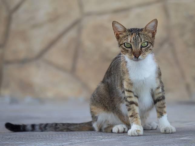 cat-4598199_1920