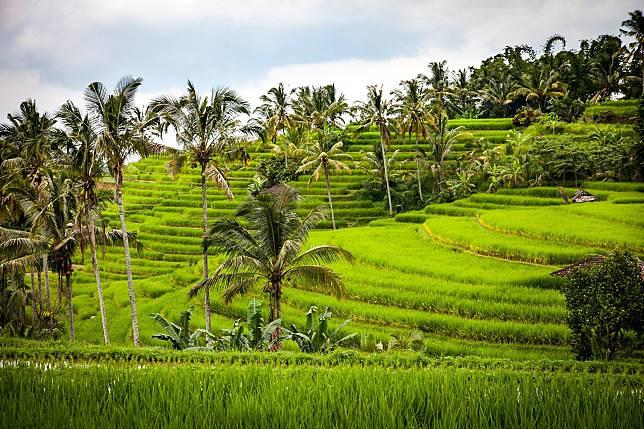 ▲農地、稻田、檳榔樹、鄉村、鄉下、農田。(示意圖/取自pixabay)
