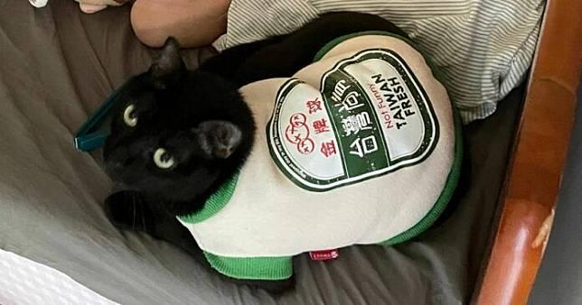 ▲穿著台啤衣的萌貓因為太可愛被鄰居騷擾。(圖/取自推特 Riley Tsang)