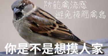 當心天氣轉涼鳳凰颱風逼近,禽流感好發期也來了!生蛋可以吃嗎?