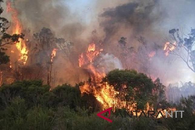 BMKG: Karhutla akibat pembukaan lahan pertanian