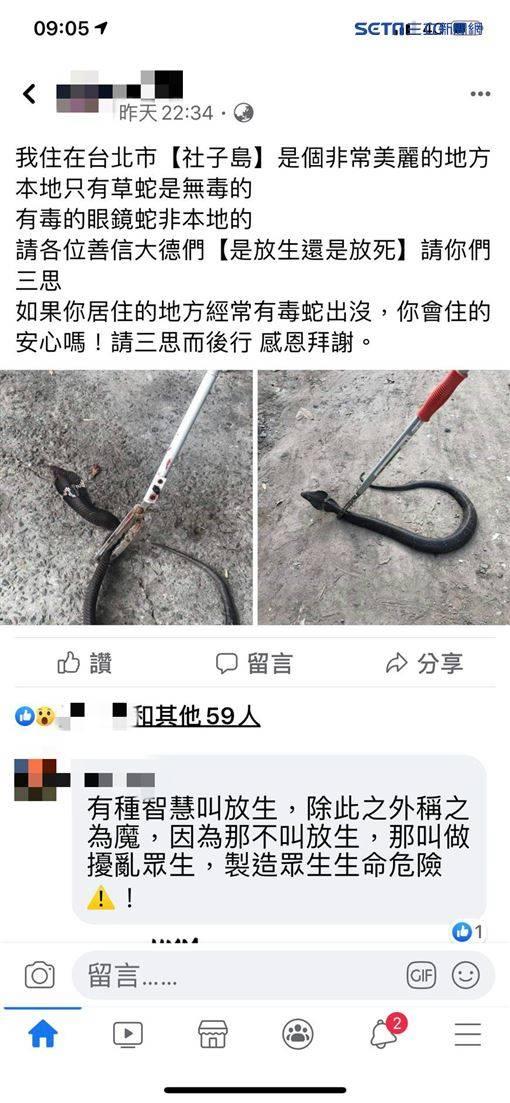 社子島狂竄眼鏡蛇 不排除人為放生