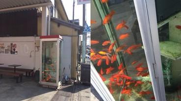 日本路邊出現驚人的「金魚電話亭」 絕對要抑制自己想打開門的衝動...