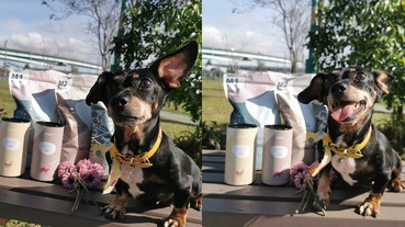 (寵物/狗糧)MIT台灣製造的犬糧-Abao阿寶寵物拌飯,最潮流的寵物拌飯,打敗挑嘴狗的優質犬糧