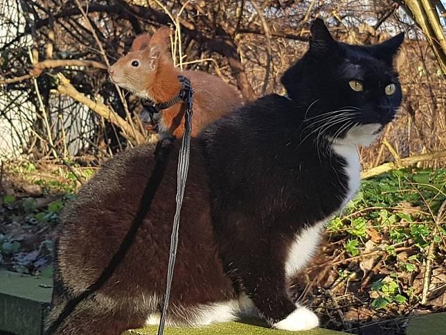 小松鼠受重傷被媽媽遺棄 黑白貓自主當起老大照顧牠!