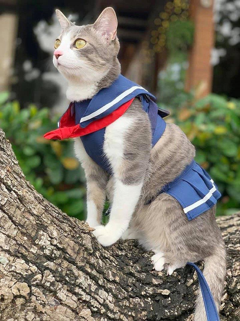高校制服造型胸背帶,貓貓狗狗皆可使用,外出安全又吸睛!! 領巾還可以拆下單獨使用喔