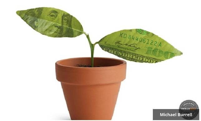 Small tree start with two money leaves in orange pot isolated on white background.
