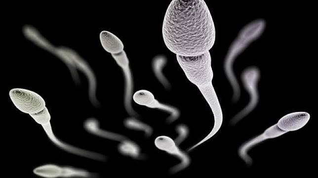 Lelaki Tak Pernah Ejakulasi Sperma di Buah Zakar Jadi Apa Ya