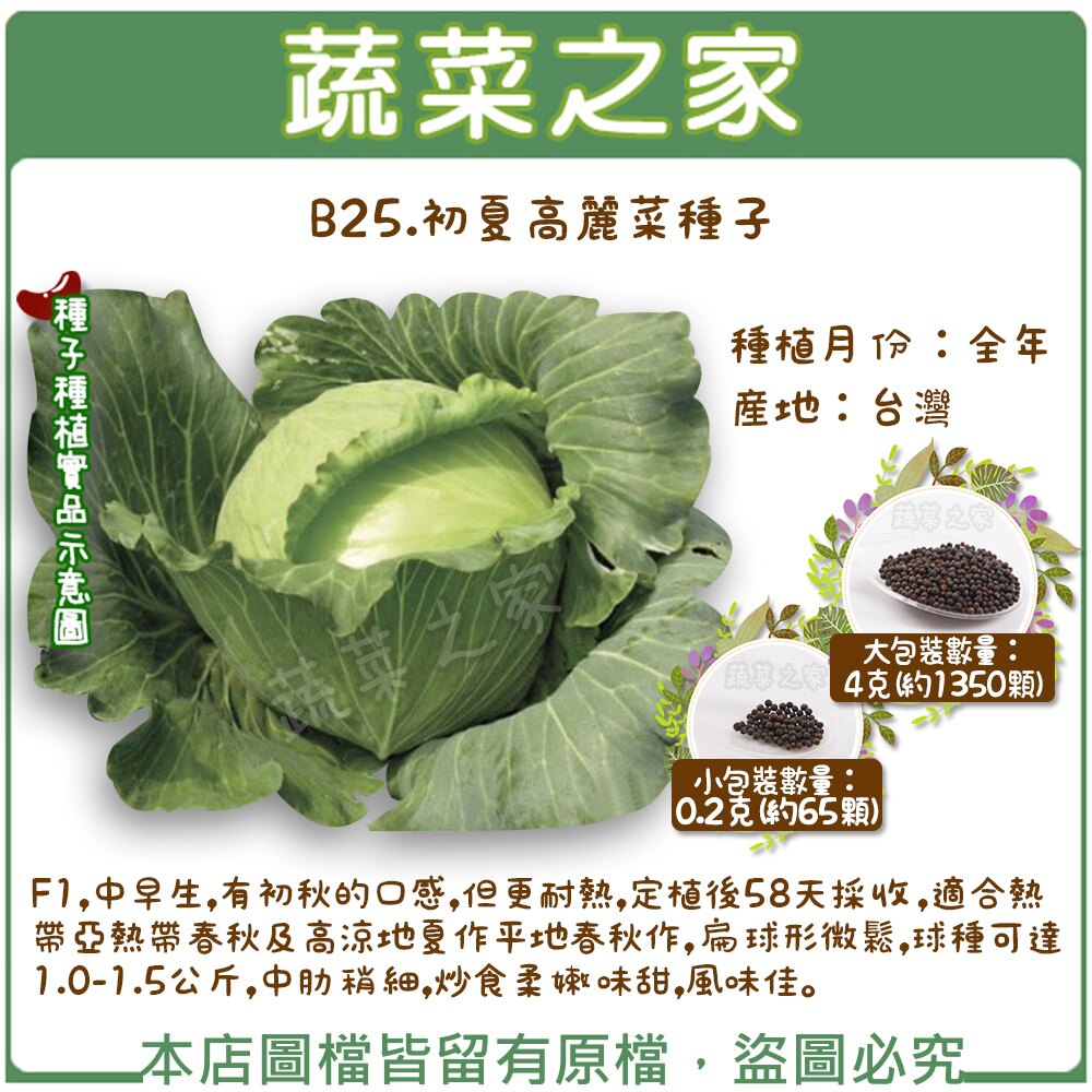【蔬菜之家】B25.初夏高麗菜種子0.2克(約65顆)、4克(約1350顆)(共有2種包裝可選)