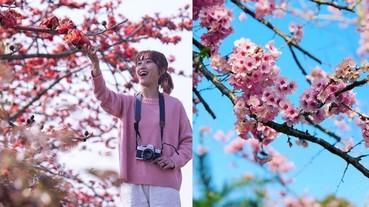 春夏季香港賞花地點 2019 全公開 不用去旅行也可以賞到花|