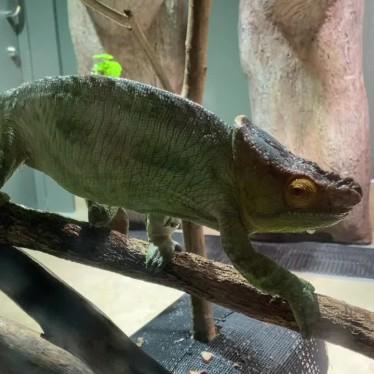カワスイ川崎水族館のundefinedに実際訪問訪問したユーザーunknownさんが新しく投稿した新着口コミの写真