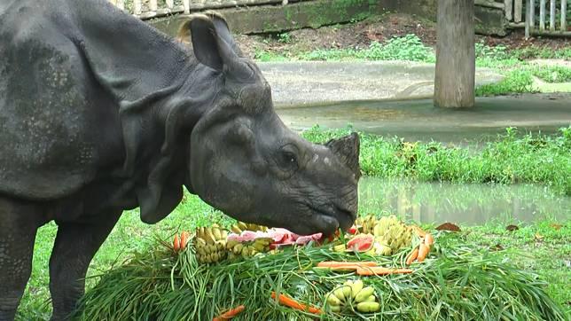 """วันนี้ """"วันแรดโลก"""" สวนสัตว์จัดมื้อพิเศษปลอบใจ """"กาลิ"""" แรดอินเดียหนึ่งเดียวของไทย ครองโสดนาน 17 ปี"""