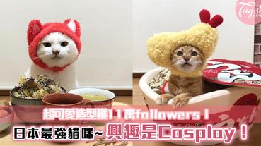 日本最強貓咪~興趣是Cosplay!讓主子們開心~超可愛造型獲11萬followers!