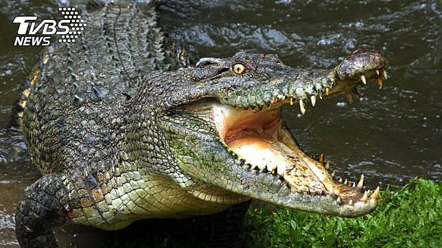 盧安達一名男子違反隔離令偷溜釣魚,遭鱷魚咬死。(示意圖/TVBS)