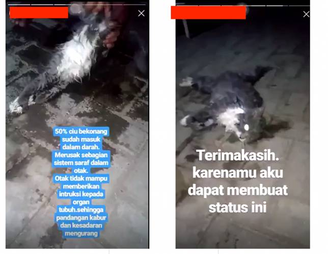 Man allegedly kills cat by forcing it to drink liquor, posts videos on Instagram