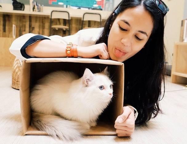 Ini 5 Seleb Indonesia Dan Kucing Kesayangan Mereka Gemas Facetofeet Com Line Today