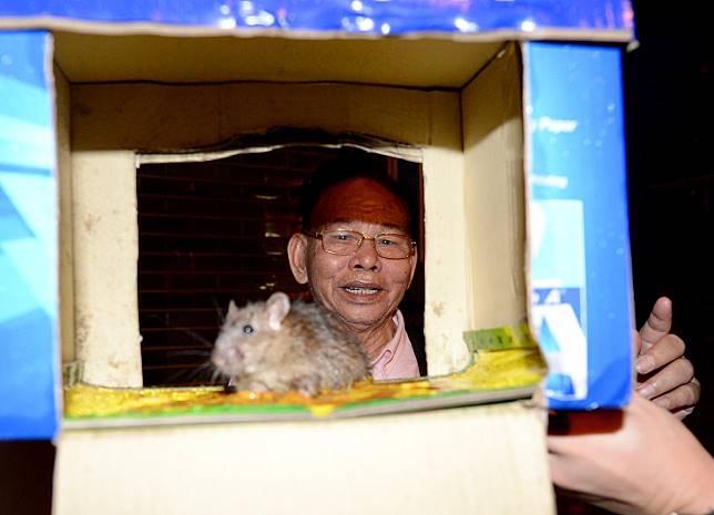 「廣州鼠王」李鏡就南下示範捉鼠大法。