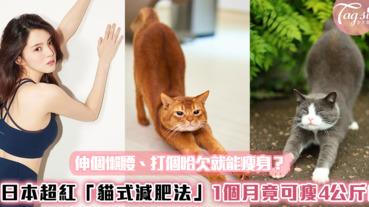 伸個懶腰、打個哈欠就能瘦身?日本超紅「貓式減肥法」1個月竟可瘦4公斤!