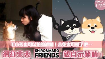 韓國最紅柴犬 SHIRO&MARO 超級萌~~推出毛小孩專屬濾鏡!讓每個人都可以跟柴柴互動,拍出各種網美、毛網紅的奇蹟美照吧❤