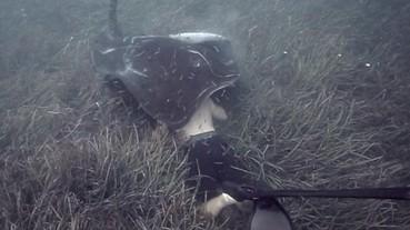 前所未有的遭遇!150 公斤的巨大魟魚 咬了潛水員的頭