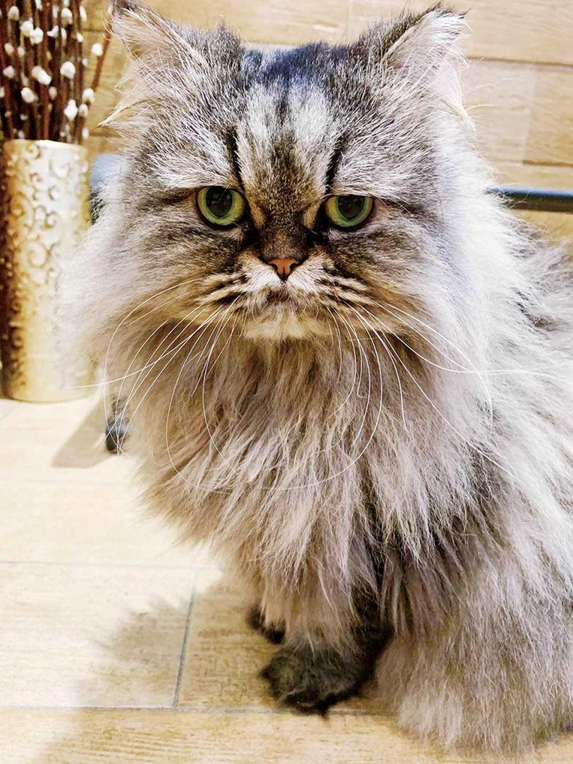 當初收養小花是為了學習貓的優雅,卻意外讓小Call變得更有責任感。(圖/小Call提供)
