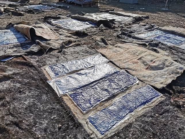 警方搜出夾層藏有毒品的牛皮。警方圖片