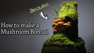 DIY好吃又好玩的菇菇盆栽