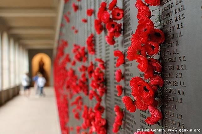 在這一天,一般人會佩戴一種紅色的虞美人花以作紀念。(互聯網)